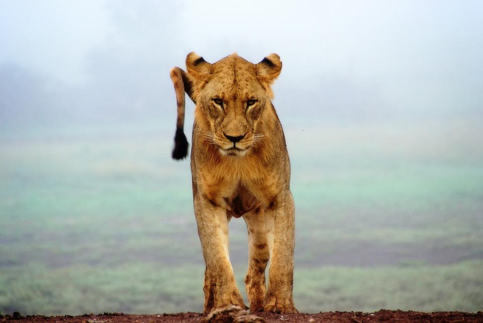 Les Lionnes dressent leur bilan cannois